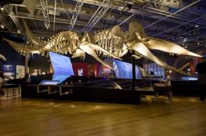 whales-exhibit-2-745x495