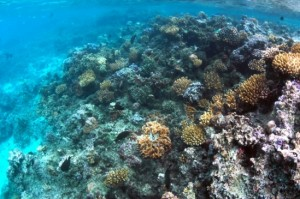 Gates-Edmunds_Reef_ENH