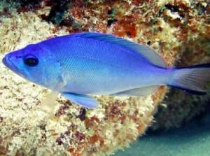 bluehamlet1