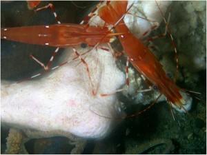 carcass-shrimp-octopus