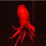 Terrifying Tentacles From The Deep: Monterey Bay Aquarium Ready For Halloween
