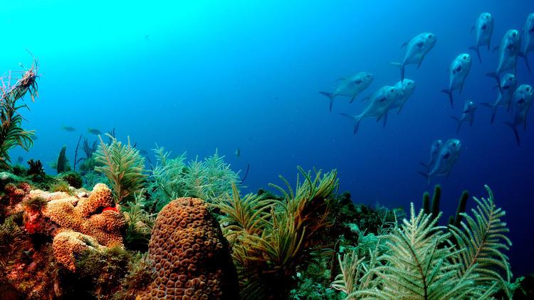 fl-reef-survey-20141023-001
