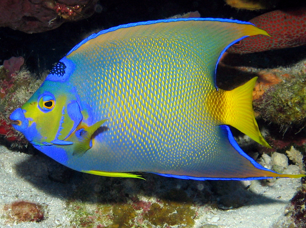 Caribbean Reefs | Reefs.com