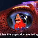 blobfish6