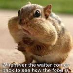 chipmunk-cheeks-when-the-waiter-checks-up