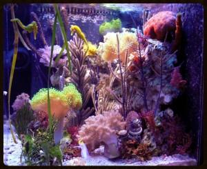 reefs.comZia