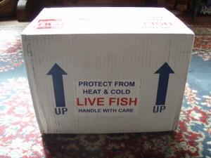 live_fish_box_2