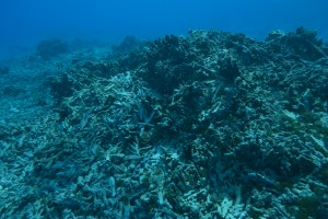 tendua-pol-fond_corallien_detritique-dsc0001