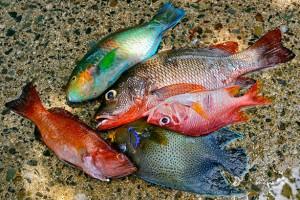 Fish-Catch