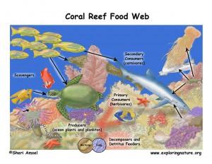 coralreef_foodweb72