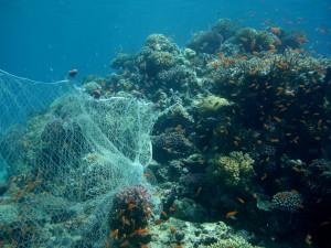 fishing net on reef