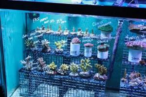 local-fish-store