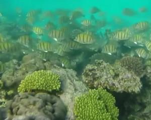 reefs.comRCplane