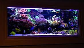 reefs.comSunnyInWall