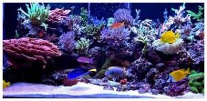 reefs.comSunnyInWallCloseup