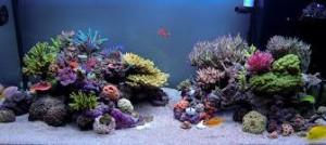 reefs.comSunnyRimless