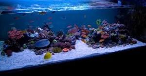 reefs.comSunnyShallow
