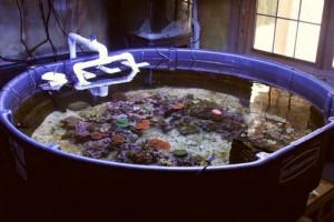 IMG_8045[1] reef tank