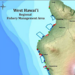The Reef Table: Trouble in Paradise? Making Heads or Tails of Hawaiian Legislation