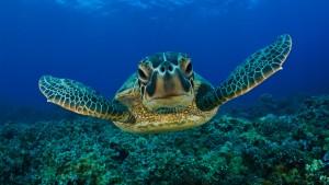 Tartaruga-marina1