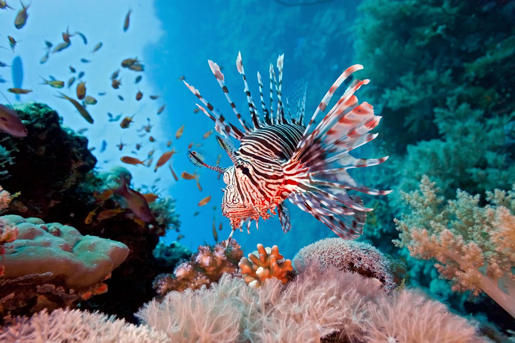 Be a good aquarist for Caribbean reef fish