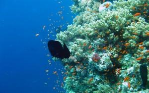 coral-reef-wallpaper-hd-4