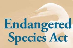 endangered-species-act