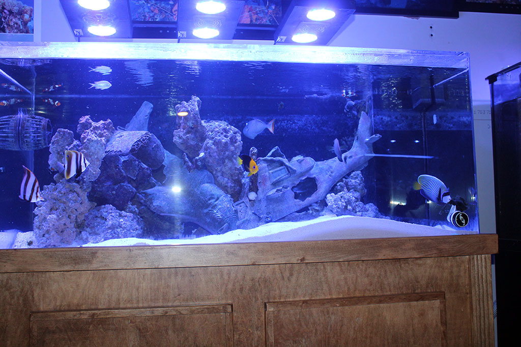 Trust me i have tanks an overview of my personal tanks for Fish only saltwater tank