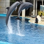 Dolphin Trainer Goes Missing