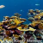 Image SWS_reefscom-photo.jpg