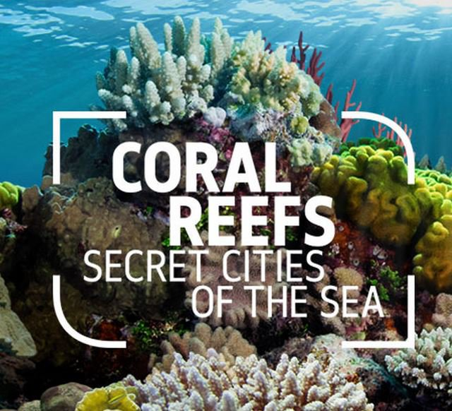 Coral-Reefs-of-the-Sea-exibition