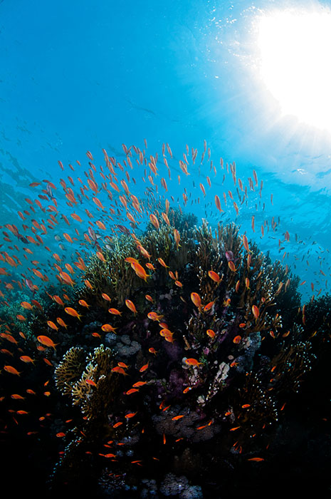 This sort of scene is inspiring many Red Sea biotope systems.