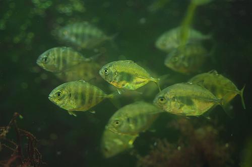 fishschooljpg