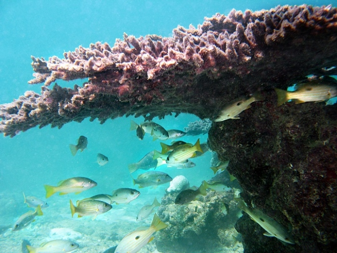 persian-coral-reef