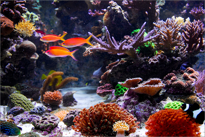 The 500g home aquarium features an open aquascape and incredible diversity.