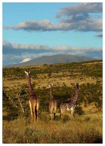 Ngorongoro National Park, Tanzania