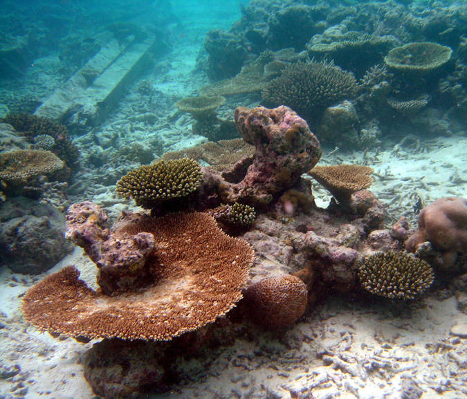 Early signs of corals under stress.