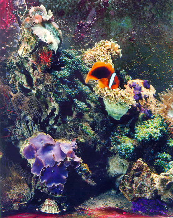 One of Terry's early reef tanks.
