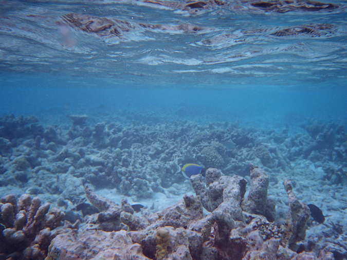 Reef destruction can be either acute or chronic-neither is a pretty sight.