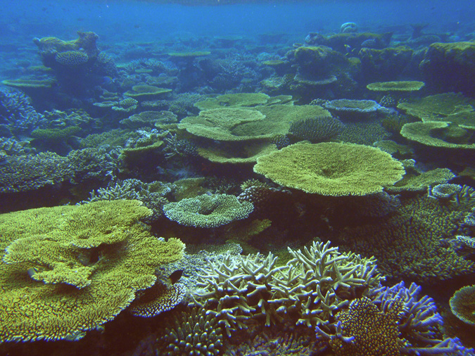 A pristine reef in the Maldives.