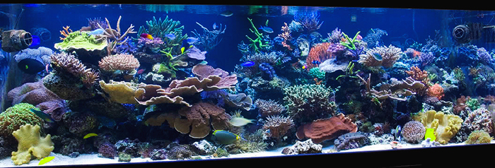 In The Previous Two Installments Of This Series, I Discussed Some Of The  Aesthetic Principles That Can Help With The Design Of Your Aquascaping.