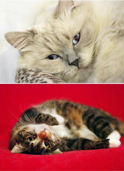 Top: Blue; Bottom: Cleo.