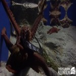 Florida Aquarium Octopus Are Officially Tampa Bay Lightning Fans
