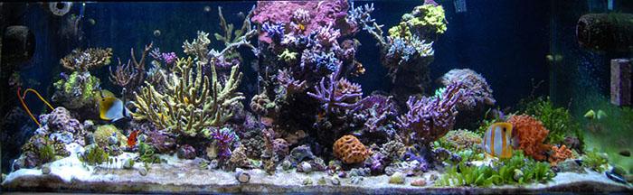 One of the last full tank shots of the author's reef aquarium.