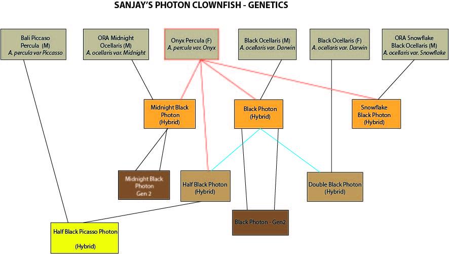 photon genetics