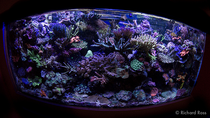 Rich's 150 gallon display, on a 300 gallon system, is running a phosphate level of 1.24 ppm, a level at 24.8 times higher than the often recommended .05 ppm. Photo by Richard Ross.