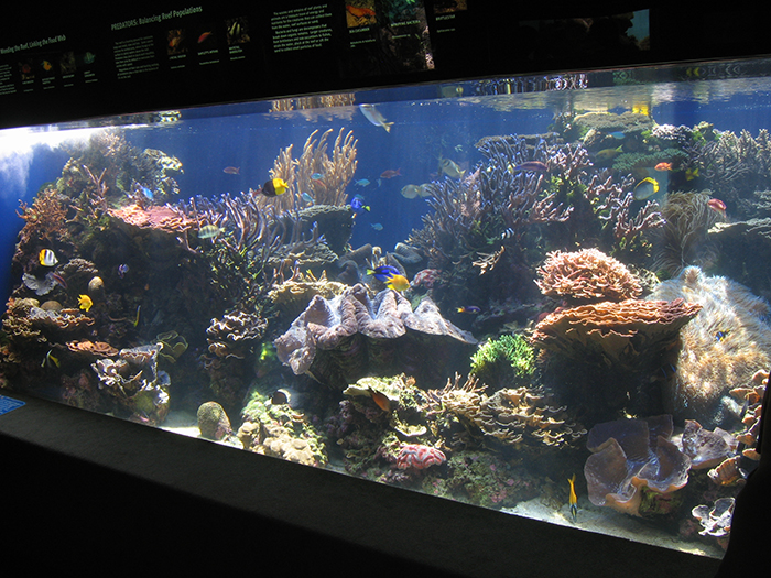 The 5000 gallon reef tank at the Waikiki Aquarium, designed and built by Charles in 2001.
