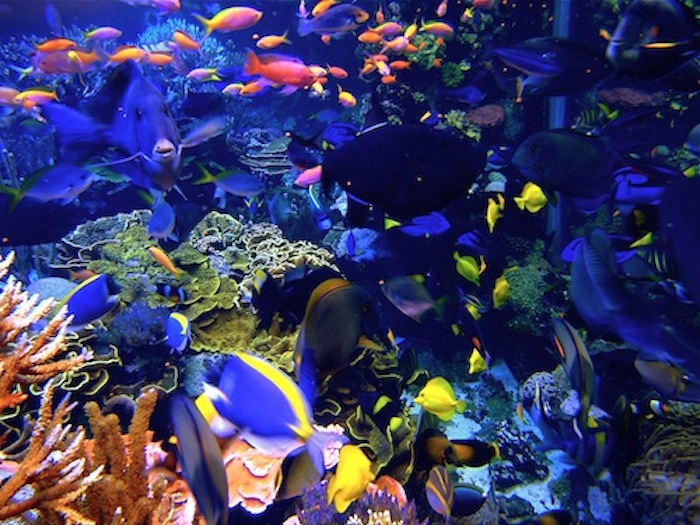 A look inside the 20,000-gallon reef tank at Atlantis Marine World (Photo by Ashleigh Gardner).