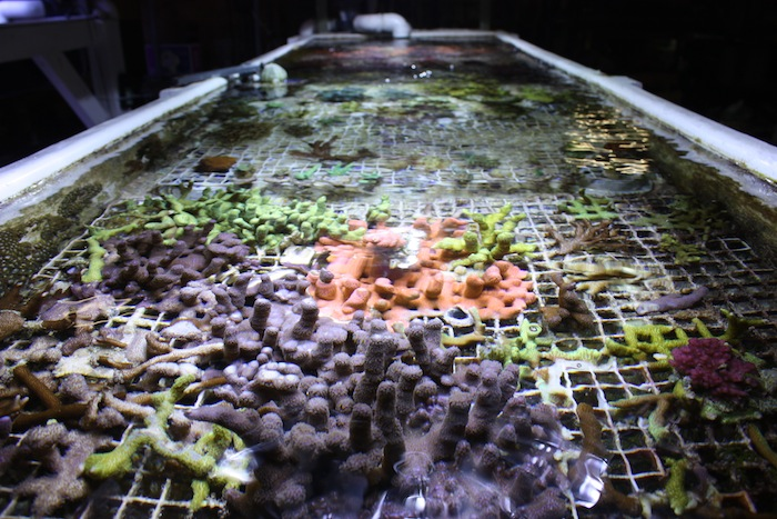 Coral propagation system.