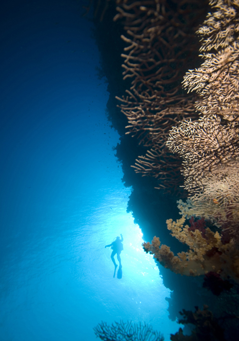 A lone diver lends some scale to the reef wall, in this case formed by an iron hull not rock.